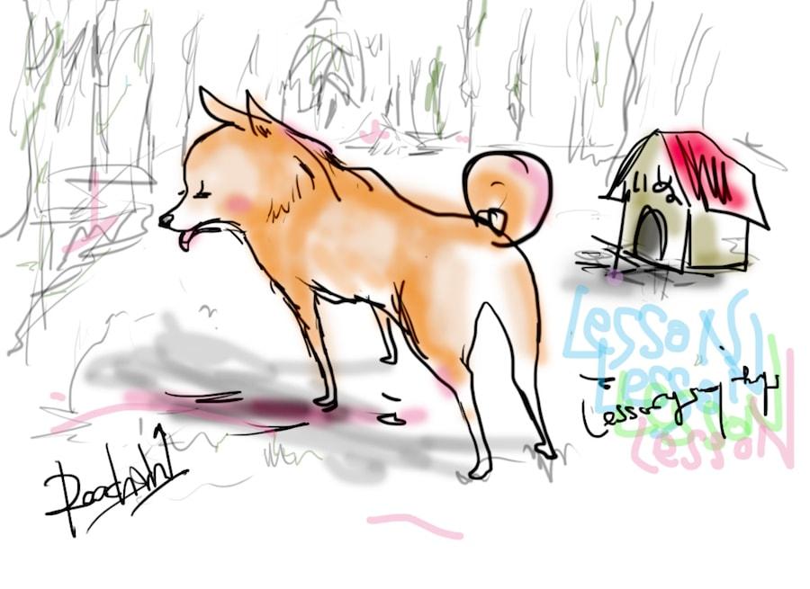 北海道犬_